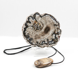Petrified Palm Wood other Accessory 2581KZ